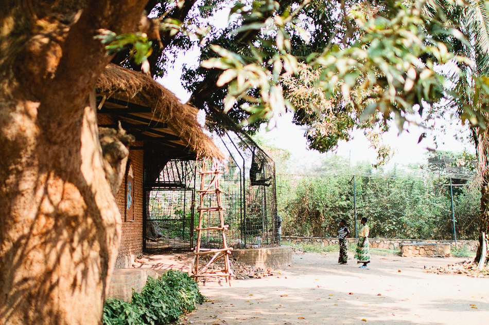 musée vivant, burundi zoo, captive chimpanzee